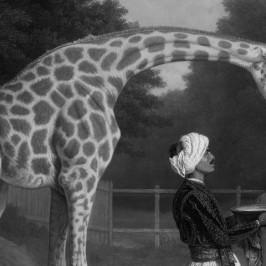 Raccontare storie con Storify: parole, foto, video e… giraffe